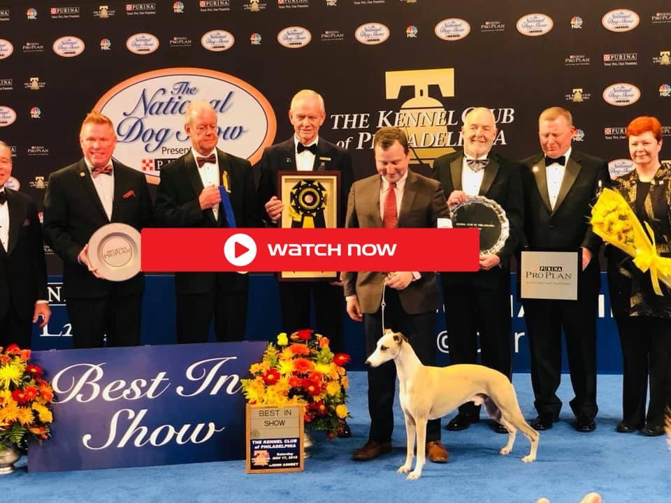 national dog show 2020 - photo #11