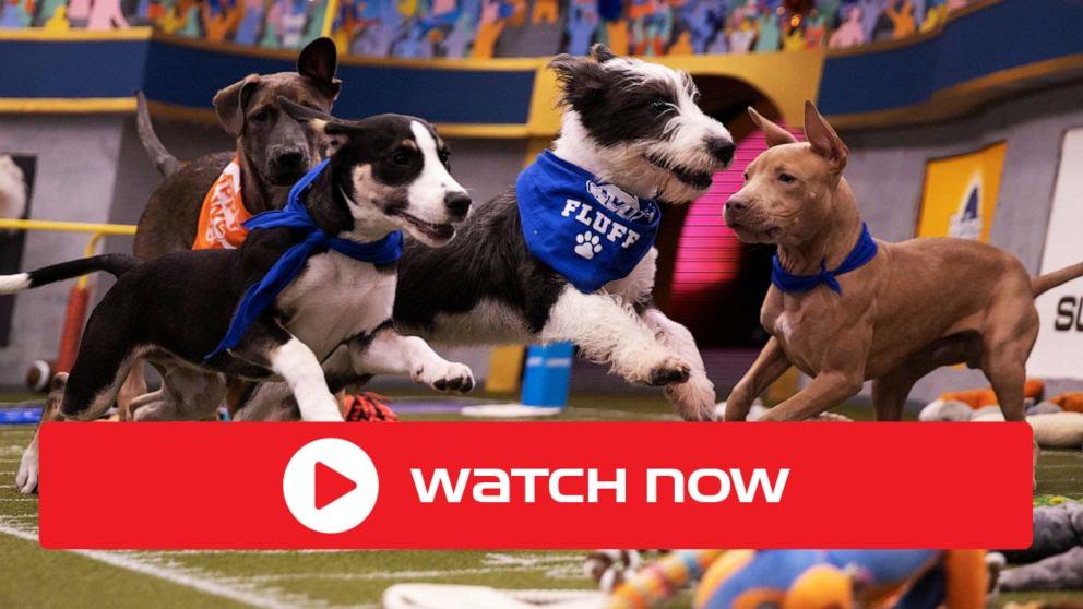 Puppy Bowl 2021 Live: Stream Free Online, TV Coverage ...